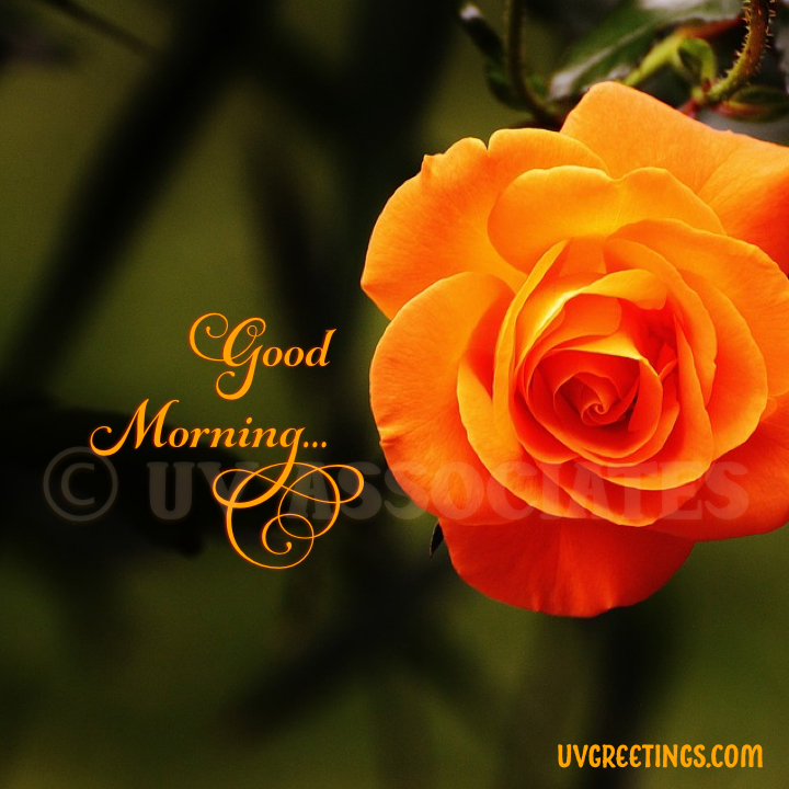Good Morning Images | UVGreetings