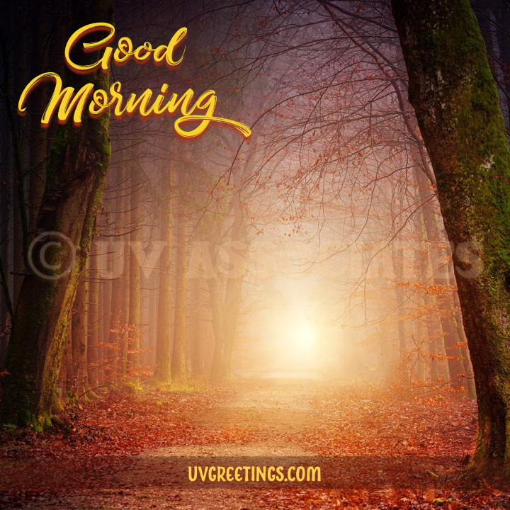 Forest path with rumbling leaves enlightened by Sun to inspire someone to follow their dreams - good morning wish