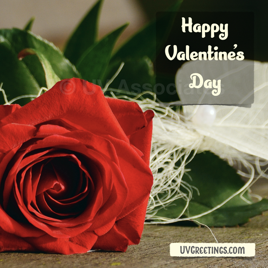 eCard with a red rose and Happy Valentine's Day message