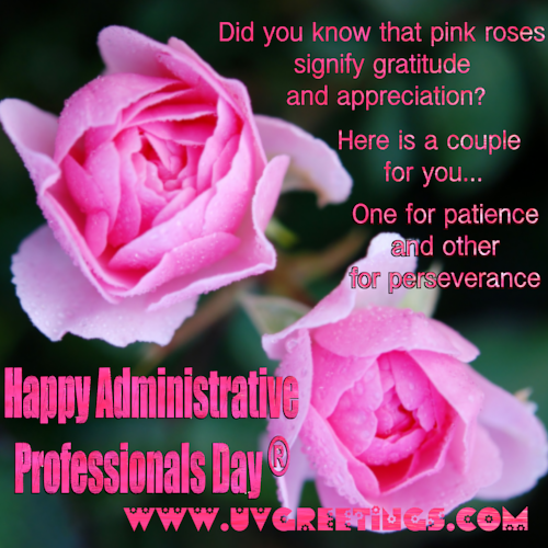 Pink Roses for Gratitude and Appreciation on Admin Pro Day