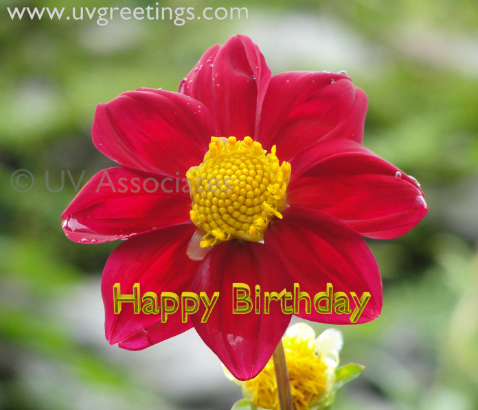 Birthday ecard with bright Yellow Red Flower and yellow outlined 3d text