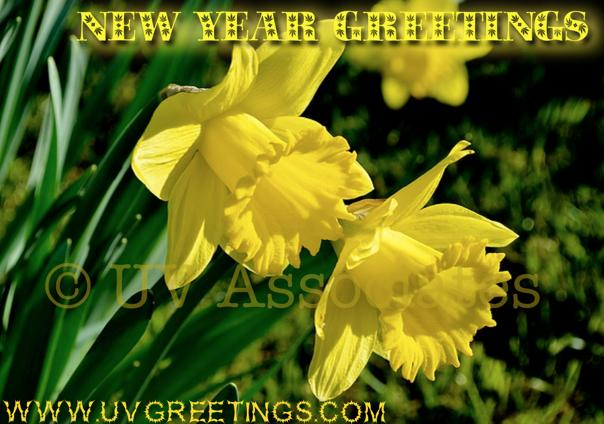 New Year Greetings - Bright Yellow Flowers to wish bright new year