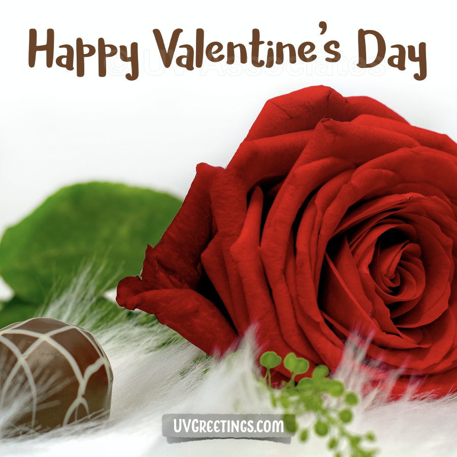 A Red Rose and Chocolate for the Valentine's Day Wish